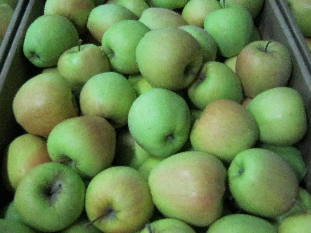 Выращивание яблок в 88