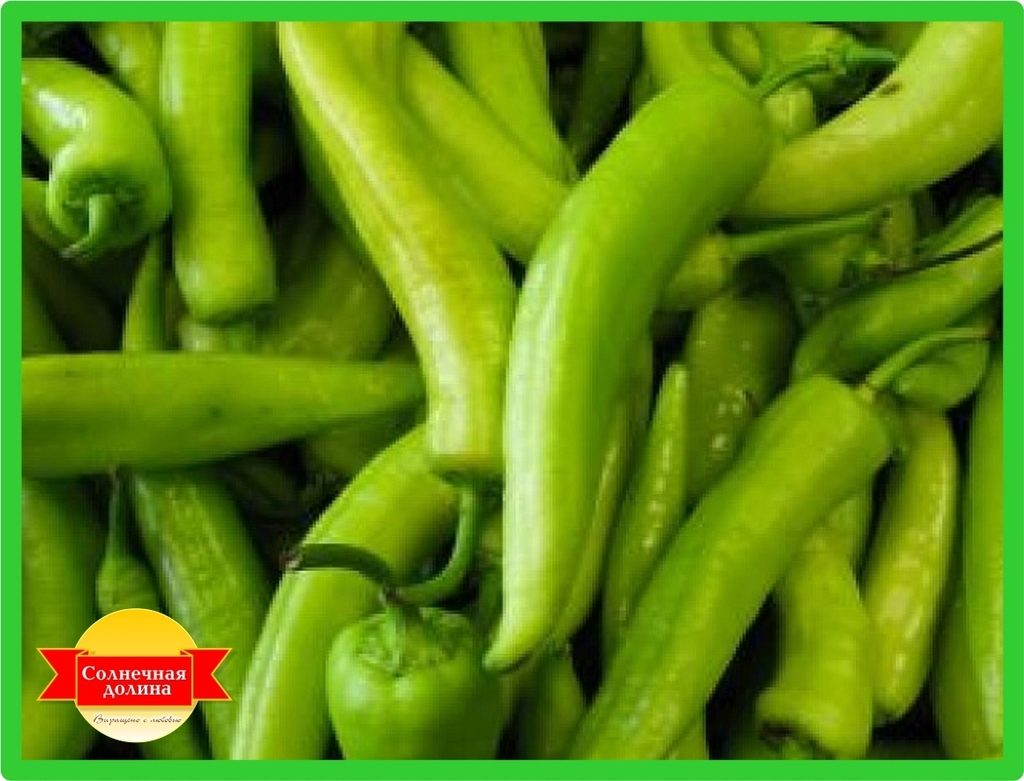 the insecticidal potential of chili pepper